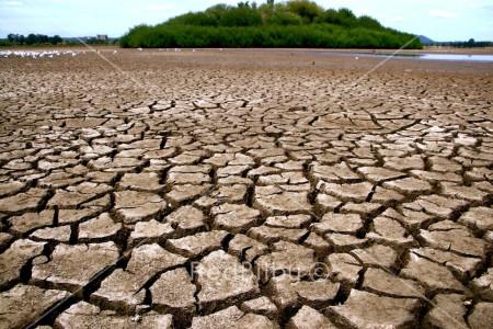 Red Bilby Dry Lake